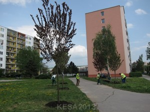 KESA2013-011