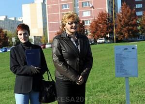 SadenieStromcekov36
